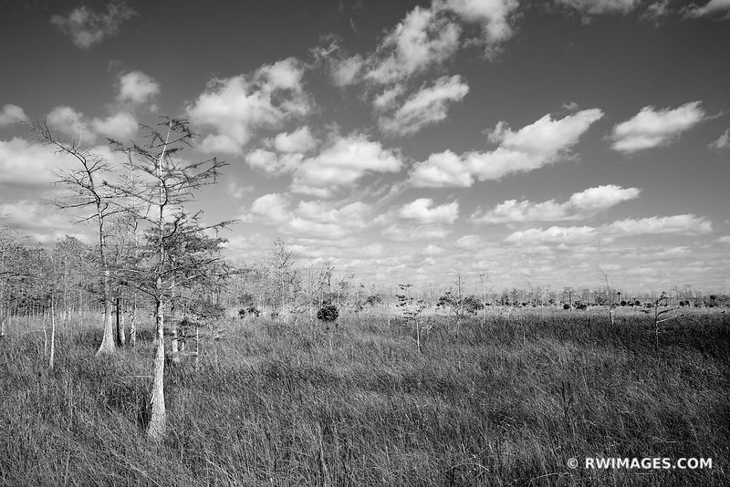 PRAIRIE DWARF CYPRESS TREES LOOP ROAD BIG CYPRESS NATIONAL PRESERVE EVERGLADES FLORIDA BLACK AND WHITE