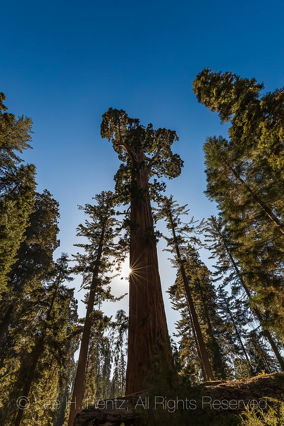 General Grant Grove in Kings Canyon National Park