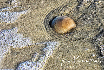 Shell on Beach No. 3, Galveston, Texas