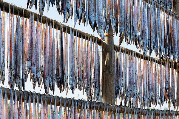 Racks of Drying Fish