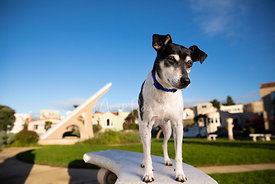 Jack Russell Dog Near Giant Sun Dial in San Francisco