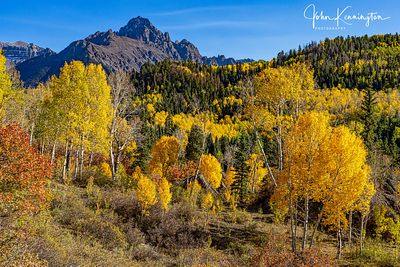 Mount Sneffels Aspens, Uncompahgre National Forest, Colorado