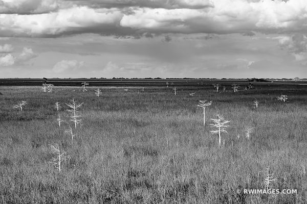 PA-HAY-OKEE PRAIRIE DWARF CYPRESS TREES EVERGLADES FLORIDA BLACK AND WHITE