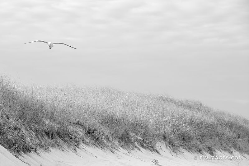 SEAGULL BEACH DUNE GRASSES NANTUCKET ISLAND BLACK AND WHITE