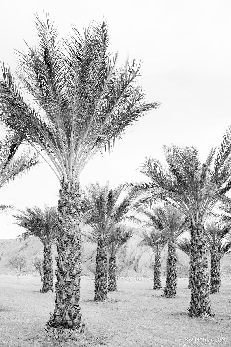 DATE PALMS OASIS DEATH VALLEY CALIFORNIA VERTICAL BLACK AND WHITE