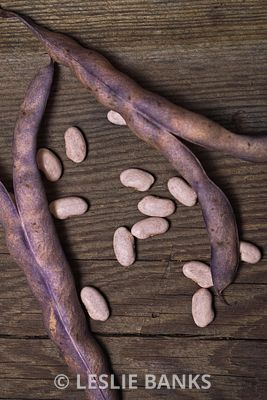 Dried Purple Pole Beans