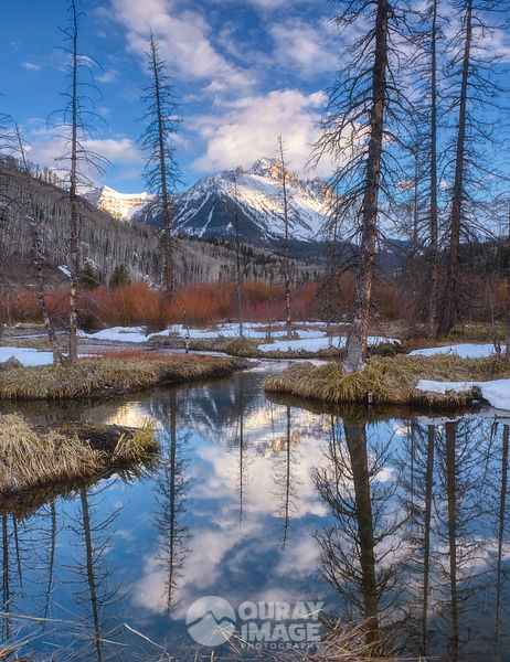 Beaver Reflections of Mount Sneffels