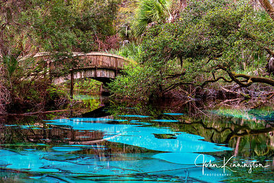 Fern Hammock Springs, Ocala National Forest, Florida