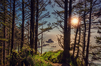 oregon_coast-49