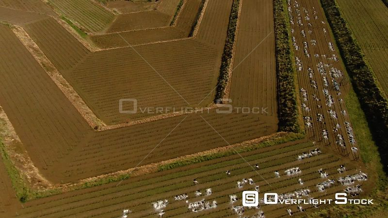 Geometric Shapes of a Vineyard Revealing the East Coast of Sicily Italy