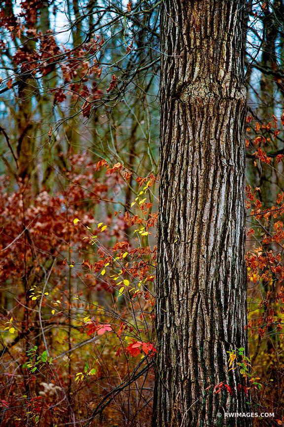 LATE AUTUMN FOREST CHICAGO NORTH SHORE RYERSON WOODS FOREST PRESERVE RIVERWOODS ILLINOIS MIDWEST LANDSCAPE NATURE LATE FALL