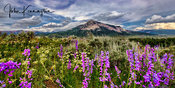 WIldflowers Below Crested Butte Panoramic, Colorado