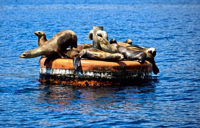Seals on a float