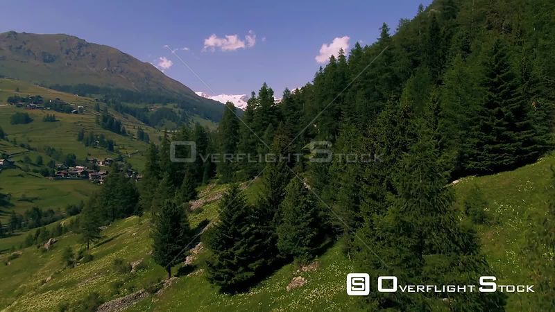 Monte Rosa in the Italian Alps through pine trees