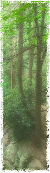 SMOKY_MOUNTAIN_TREES