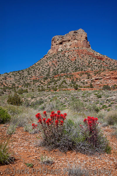 Grand Butte (Utah) and Indian Paintbrush in bloom
