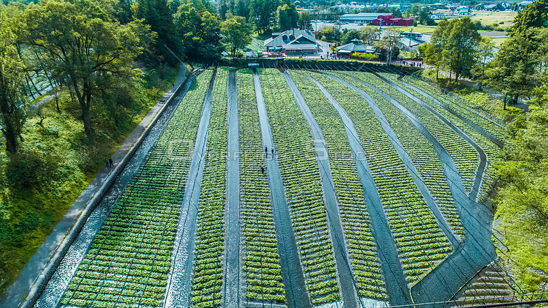Overview Drone shot of Daio Wasabi Farm. Azumino Nagano Japan