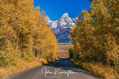 Gros Ventre Road Foliage, Grand Teton National Park, Wyoming