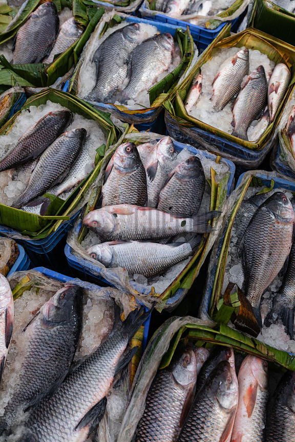 Fresh Catch at the Fishery Ghat Market