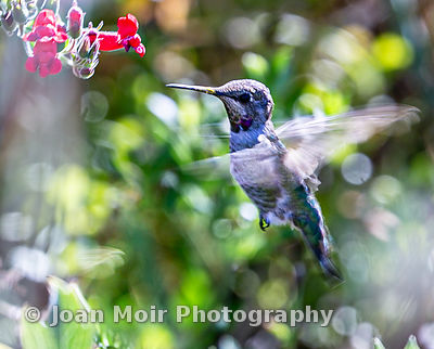 Hummingbird_Journey_XIV