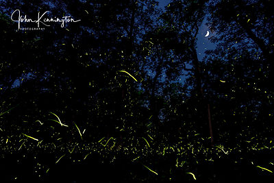 Fireflies Under Crescent Moon, Pryor, Oklahoma
