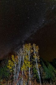Trembling Aspens at Night in Great Basin National Park