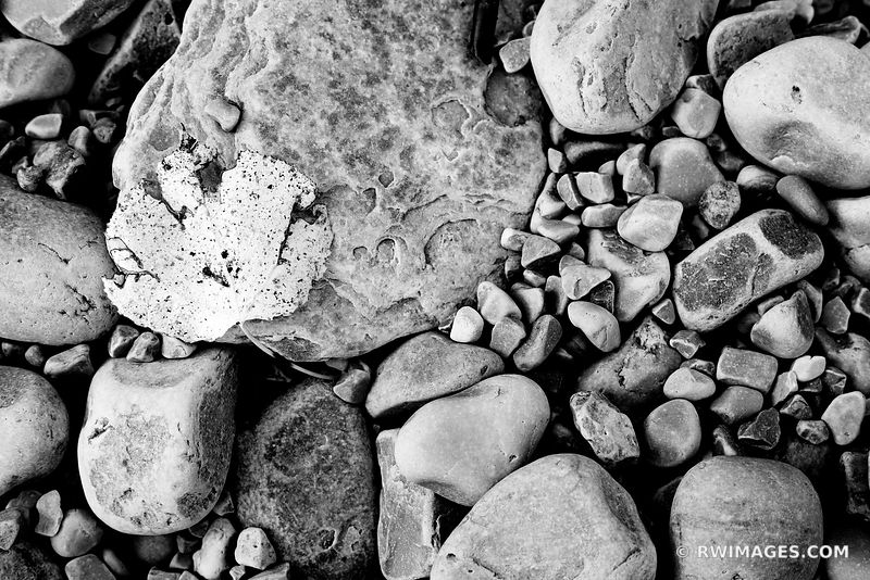 BEACH ROCKS AUTUMN LEAF ROCK ISLAND STATE PARK WISCONSIN DOOR COUNTY WISCONSIN BLACK AND WHITE