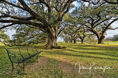 Oak Alley Plantation Bench, Vacherie, Louisiana
