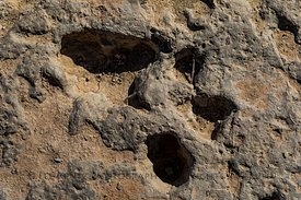 Shrimp Burrows at Red Gulch Dinosaur Tracksite