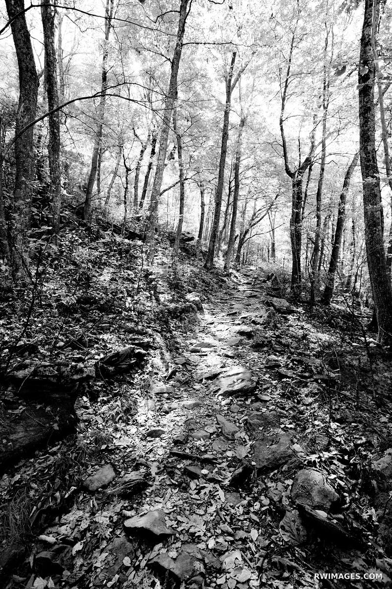 BEARFENCE TRAIL FOREST SHENANDOAH NATIONAL PARK VIRGINIA BLACK AND WHITE VERTICAL