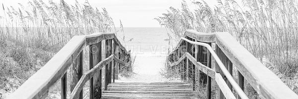 Beach Boardwalk and Sea Oats Florida Black and White Panorama