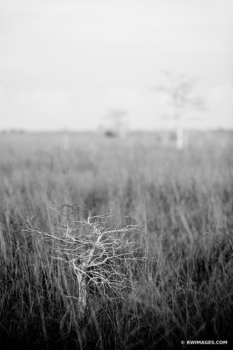 DWARF CYPRESS AND SAWGRASS PRAIRIE PA-HAY-OKEE OVERLOOK EVERGLADES NATIONAL PARK FLORIDA VEERTICAL BLACK AND WHITE LANDSCAPE