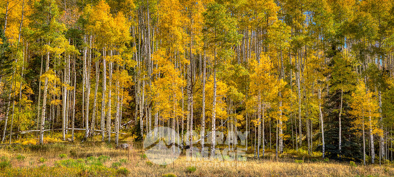 Aspen Gold, Telluride - Large Print Option