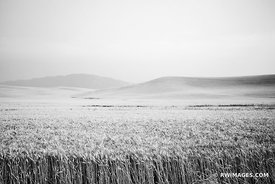 WHEAT FIELD PALOUSE WASHINGTON BLACK AND WHITE LANDSCAPE
