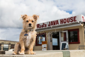 Terrier Sitting in Front of Red's Java House in SF