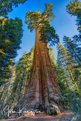 General Grant Giant Sequoia No. 1, Kings Canyon National Park, California