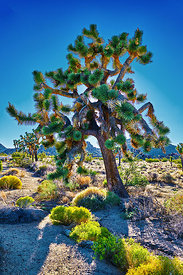 Electric Joshua Tree