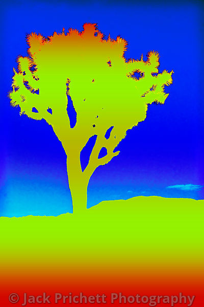 Joshua Tree, graphic art silhouette in yellow.