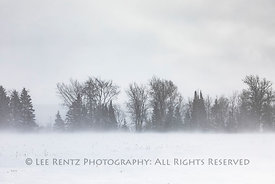 Hedgerow and Blowing Snow in Michigan