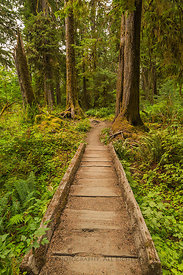 Boardwalk in Hoh Rain Forest of Olympic National Park
