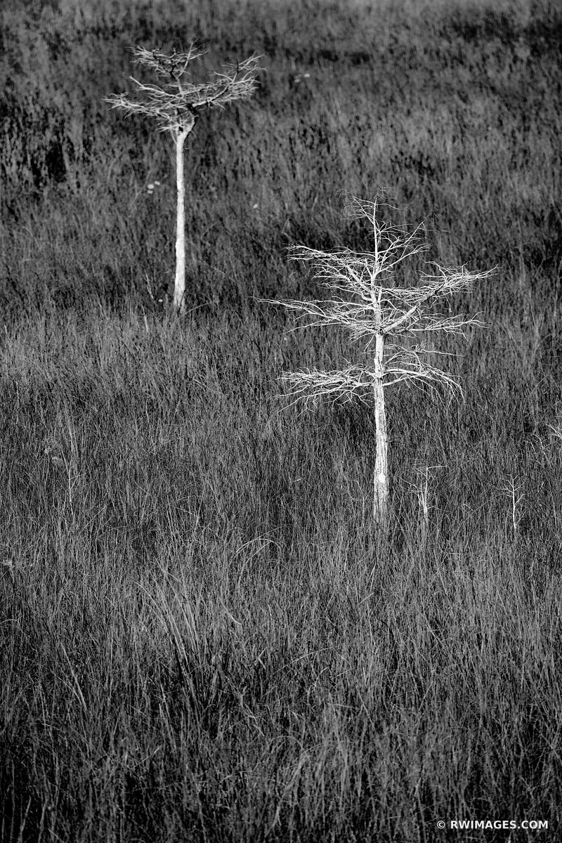 PA-HAY-OKEE PRAIRIE GRASSLANDS DWARF CYPRESS TREES EVERGLADES FLORIDA BLACK AND WHITE