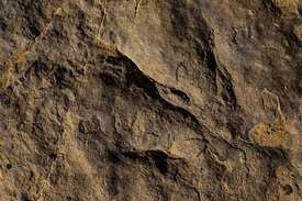 Theropod Tracks at Red Gulch Dinosaur Tracksite