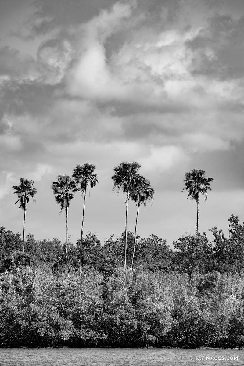 TALL PALM TREES TEN THOUSAND ISLANDS EVERGLADES NATIONAL PARK FLORIDA BLACK AND WHITE VERTICAL