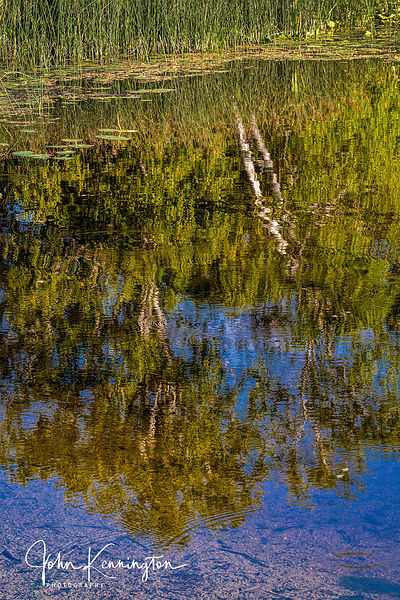 Birch Tree Reflection, Door County, Wisconsin
