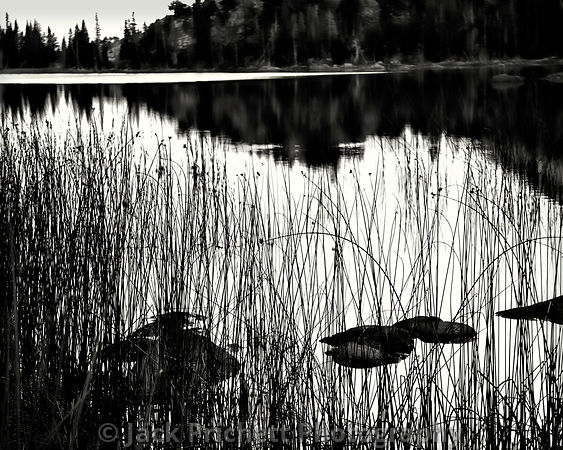 Reeds and water, Fremont Lake,