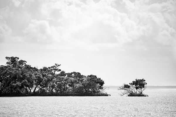 MANGROVE ISLAND GULF OF MEXICO TEN THOUSAND ISLANDS EVERGLADES NATIONAL PARK FLORIDA BLACK AND WHITE