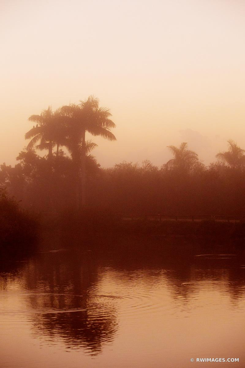 EARLY MORNING ROYAL PALM EVERGLADES NATIONAL PARK FLORIDA COLOR VERTICAL