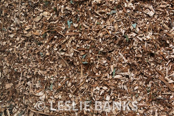 Arborist Wood Chips Background