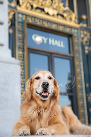 Golden Retriever Lying in Front of SF City Hall