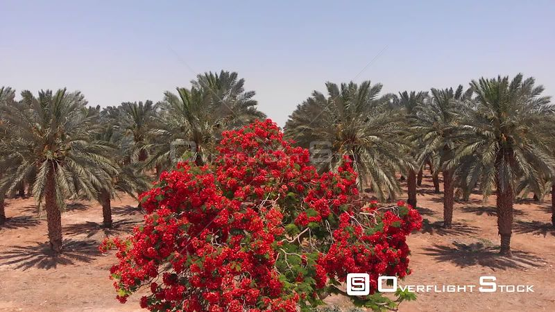 Aerial View of Erythrina Coralloides and Palm Trees in Dead Sea
